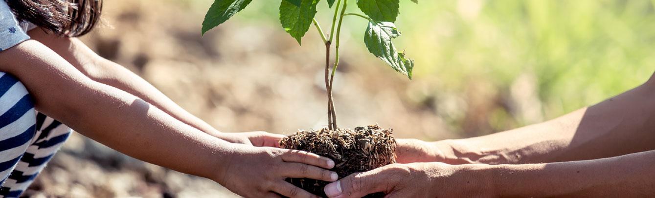 vegetation-management-banner